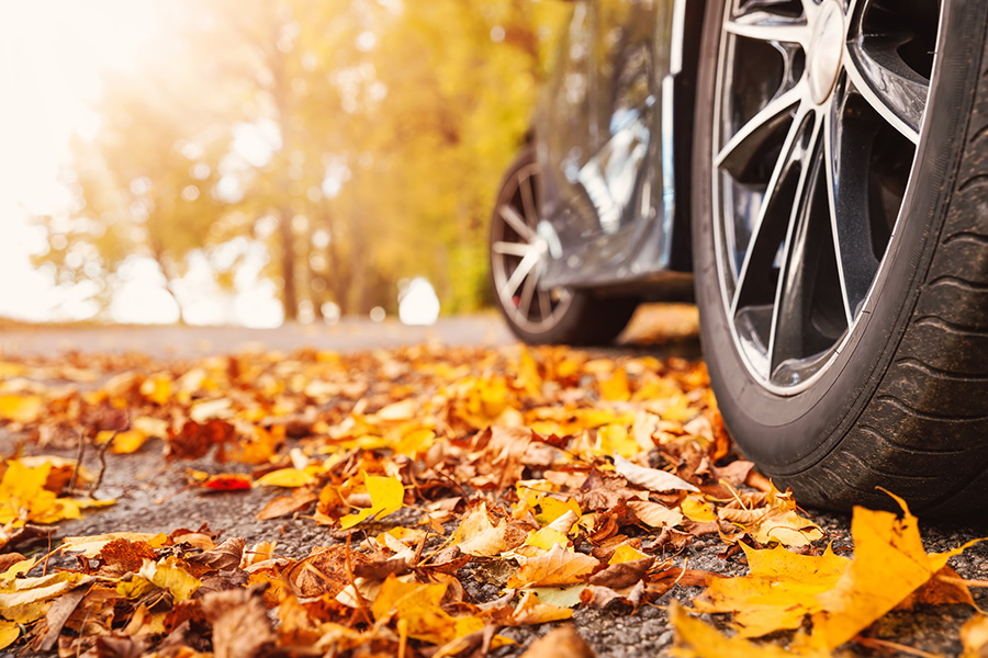 Fall leaves on a road showing lower half of car vehicle