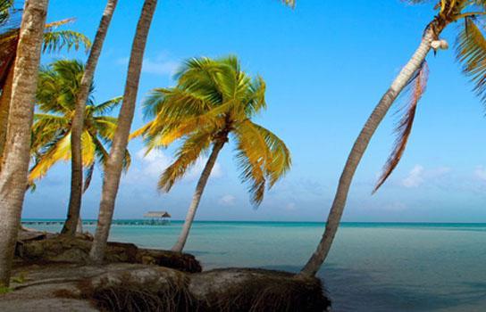 Cuba - beach with palm trees