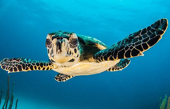 Plan Your Aquarium Visit Aaa Hoosier