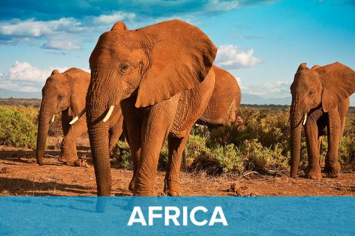AAA Featured Destinations - Africa