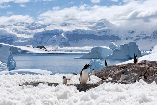 Well Traveled with AAA Antarctica
