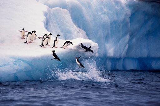 Expedition To Antarctica: Glaciers & Penguins