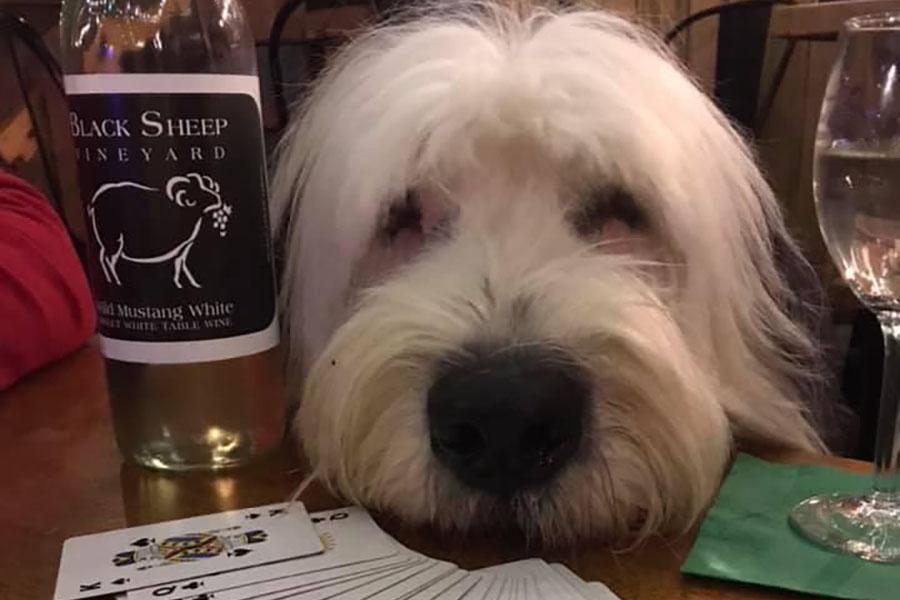 Black Sheep Vineyard Dog